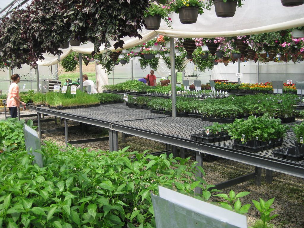Greenhouse Benches and Displays